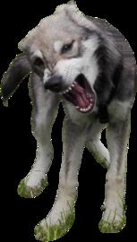 Wolfshund Maya